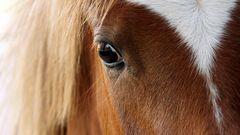 wild horses - oder auf den Spuren von Tim Flach