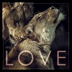 - WILD LOVE -