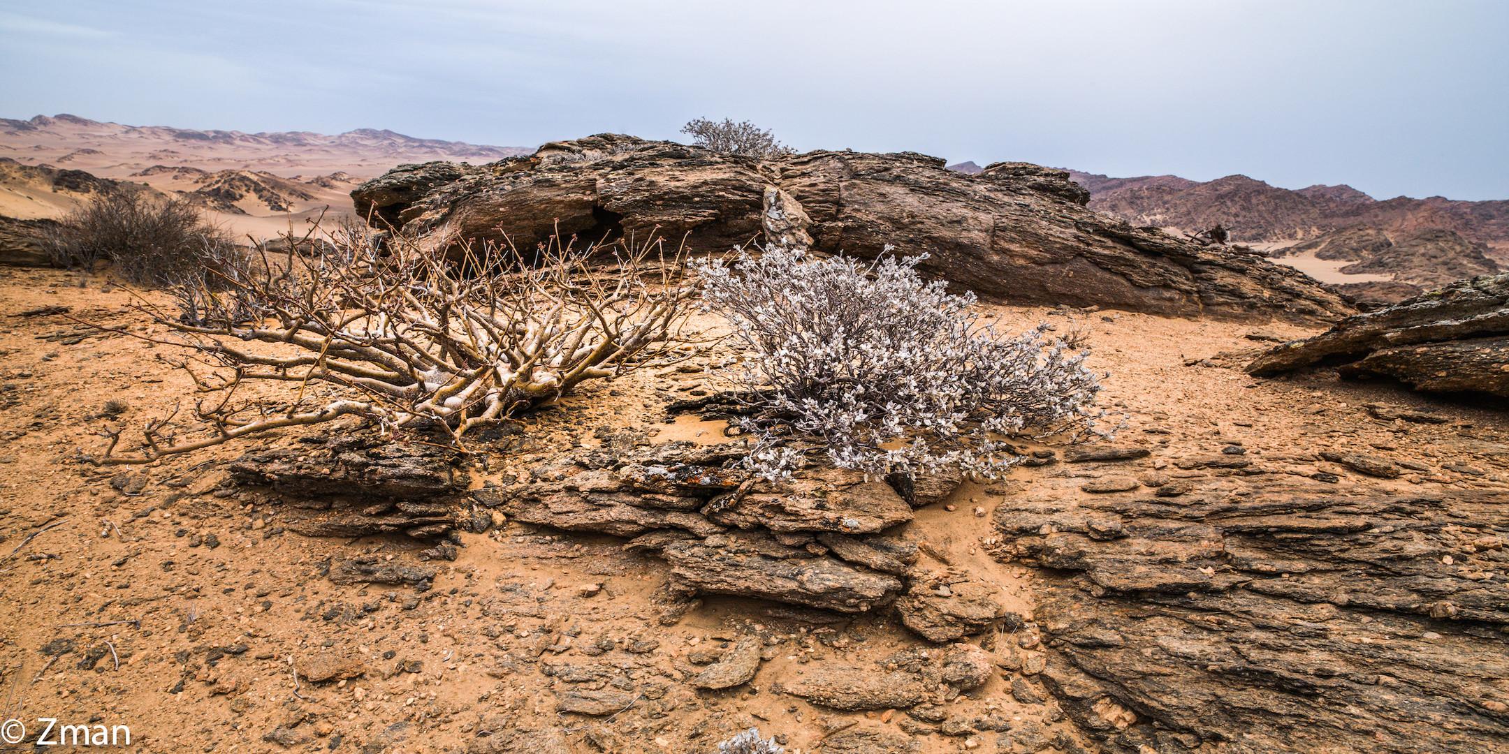 Wild Namibia 04
