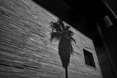 wild palm
