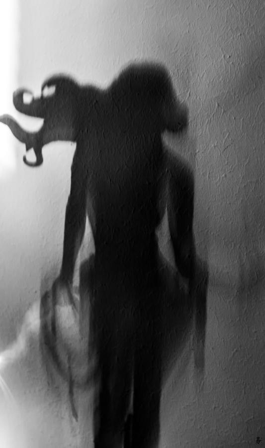 wild shadow