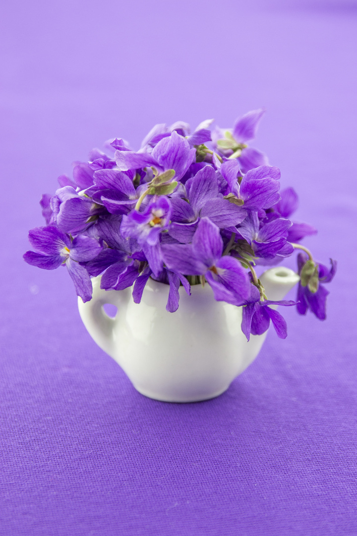 Wild violets on my table