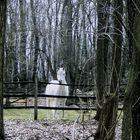 Wild White Horse