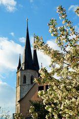Wildapfelbaum & Jakobikirche