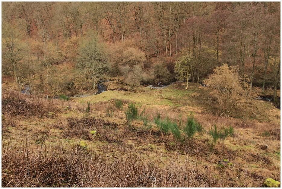 Wildbach 2 (1.Wandertour 2011)