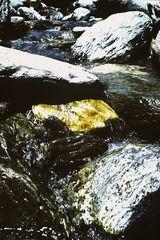 Wildbach in der Steiermark # 0215