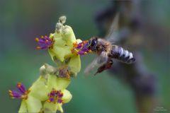 wildbienenflug