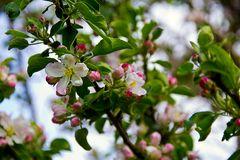 Wildblüten
