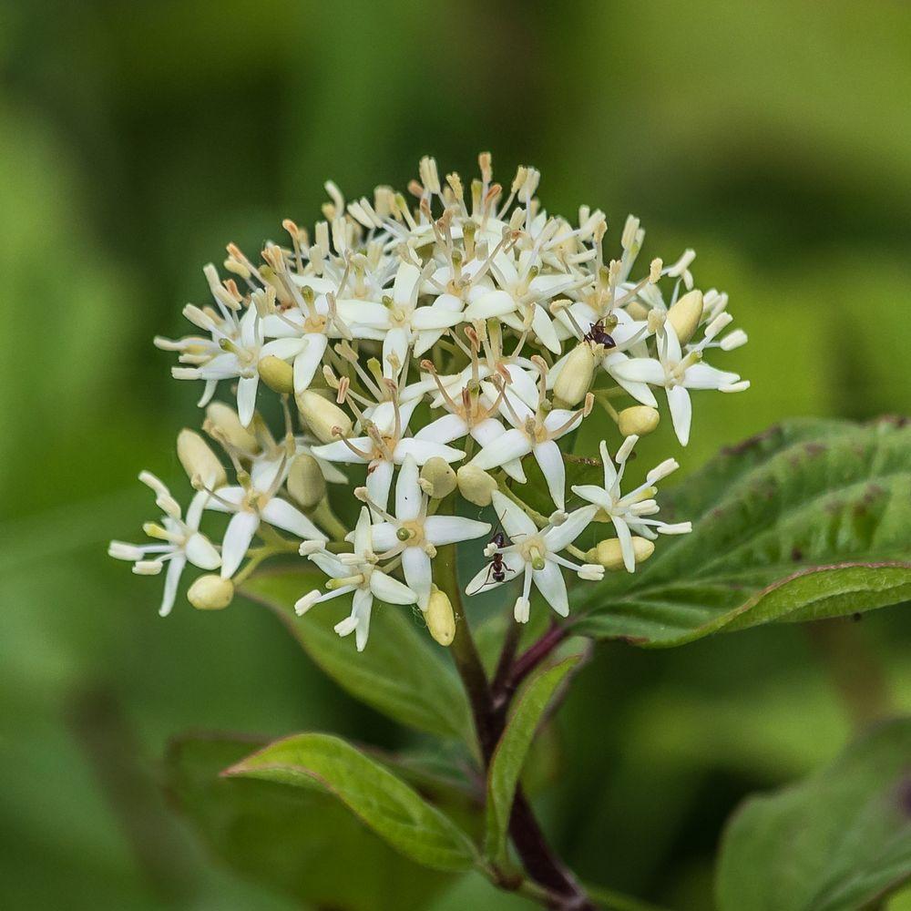 Wildblume-3239-3