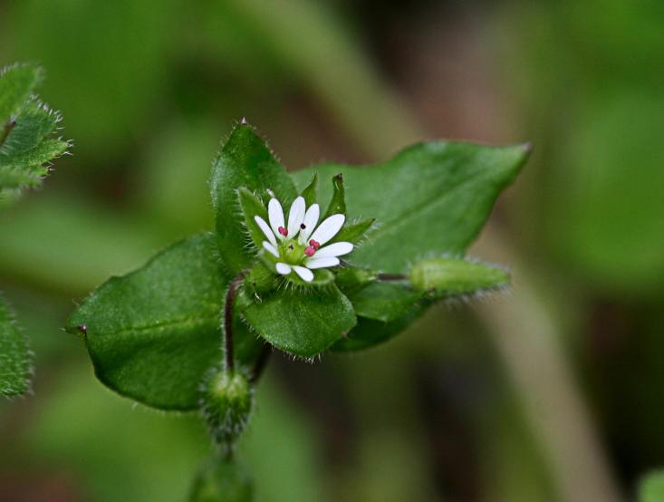 Wildblumen (47)