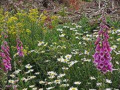 Wildblumen ...