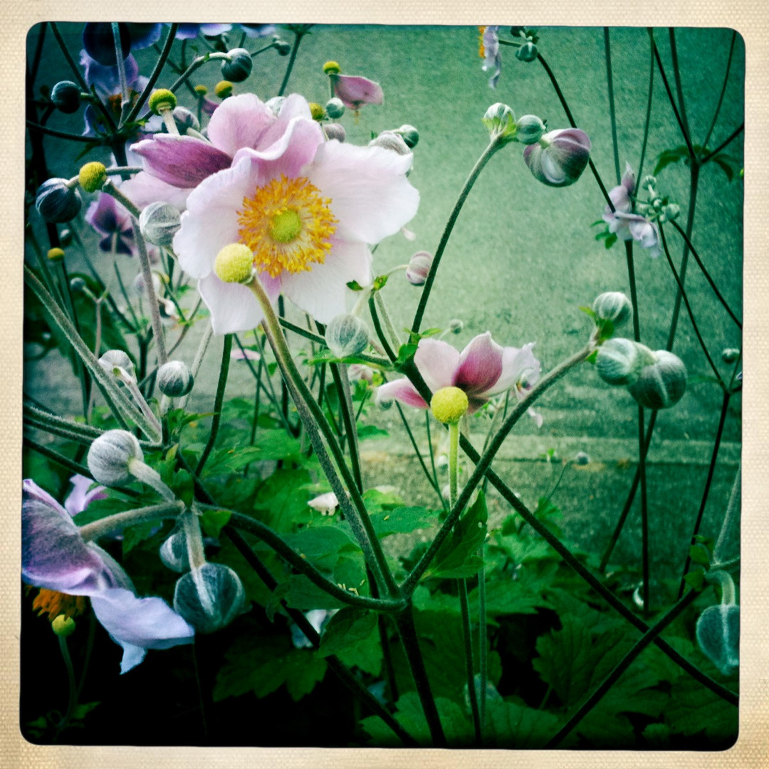 wildblumen in meinem garten wild flowers in my garden foto bild pflanzen pilze flechten. Black Bedroom Furniture Sets. Home Design Ideas