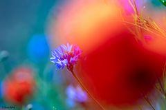 Wildblumen IV