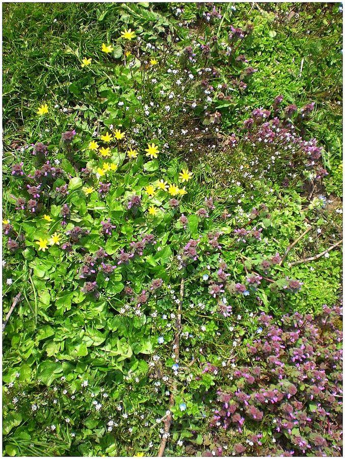 wildblumen und kr uter im weinberg foto bild pflanzen pilze flechten bl ten. Black Bedroom Furniture Sets. Home Design Ideas