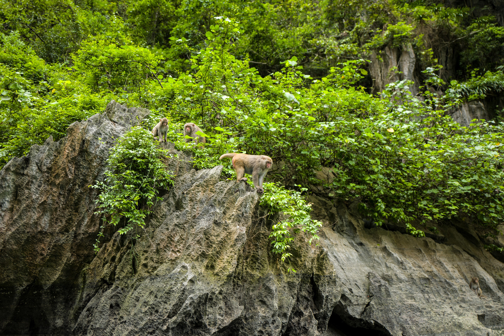 Wilde Affen