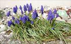 Wilde Frühlingsblumen (1)