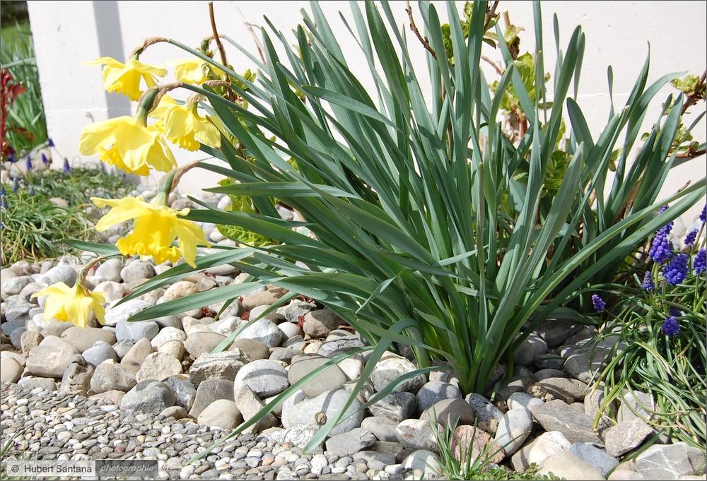 Wilde Frühlingsblumen (3)