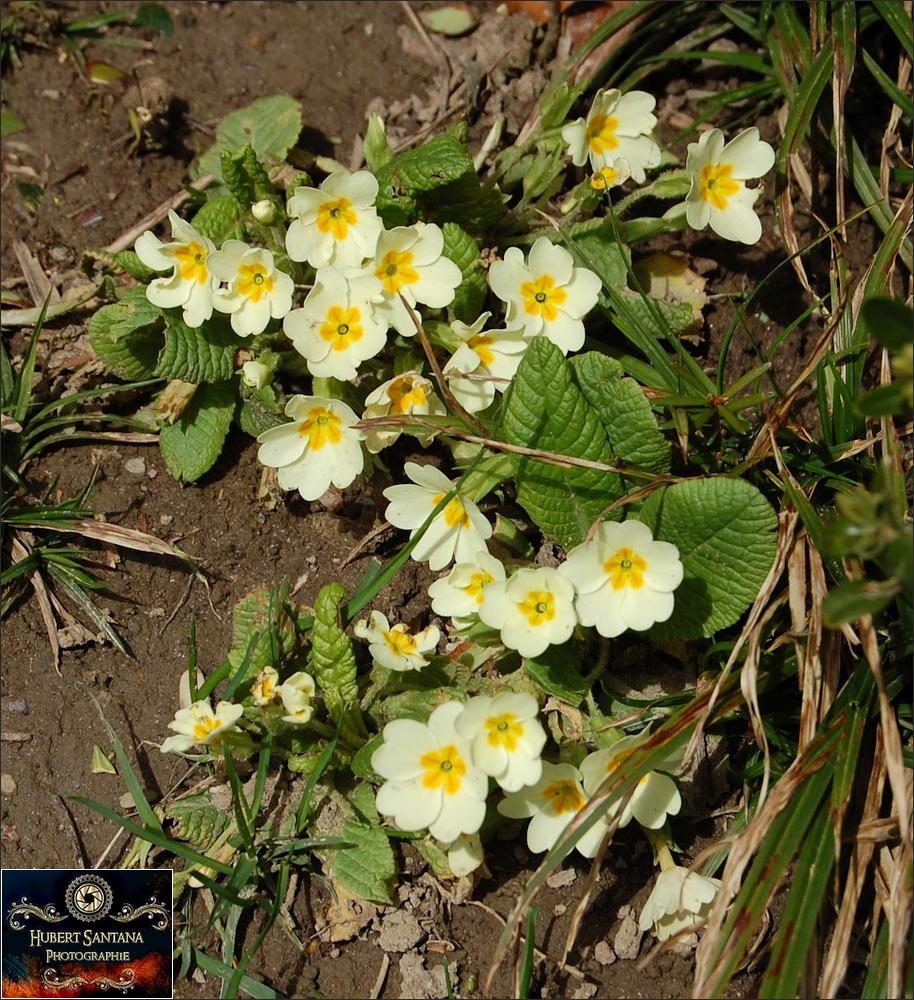 wilde frühlingsblumen (7) foto & bild | pflanzen, pilze & flechten