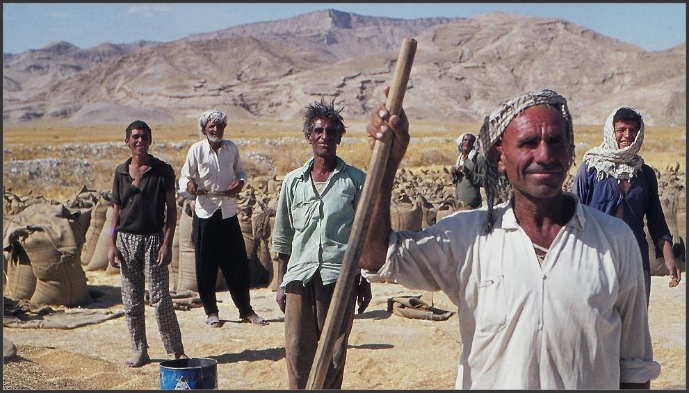 Wilde Kurden