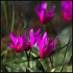 Wilde Mittwochsblümchen
