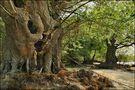 wilde Natur... von monika hagenah