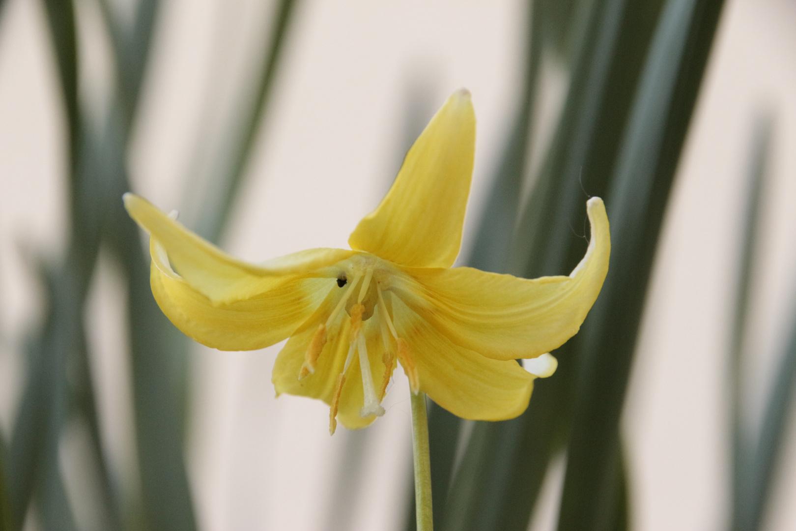 Wilde Orchidee (?)