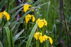 Wilde Orchideen im Naturschutzgebiet Weissenau