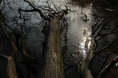wilde Uferzone
