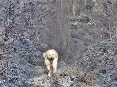 Wilder Eisbär in Deutschland