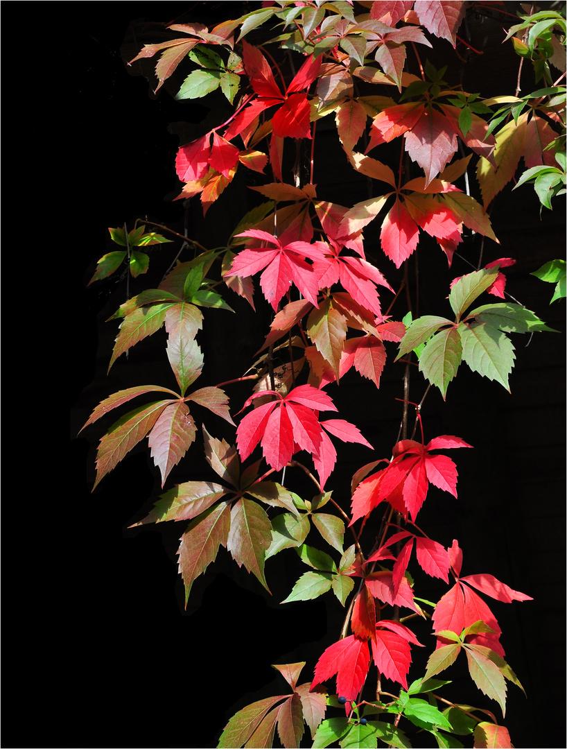 Wilder Herbst-Wein im Britzer Garten.....
