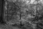 Wilder Wald (1)