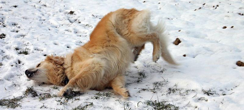 wildernde Hunde werden erschossen
