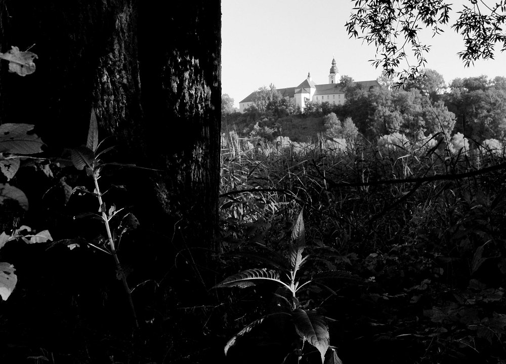 Wilderness View [Inn-O-Zonas]