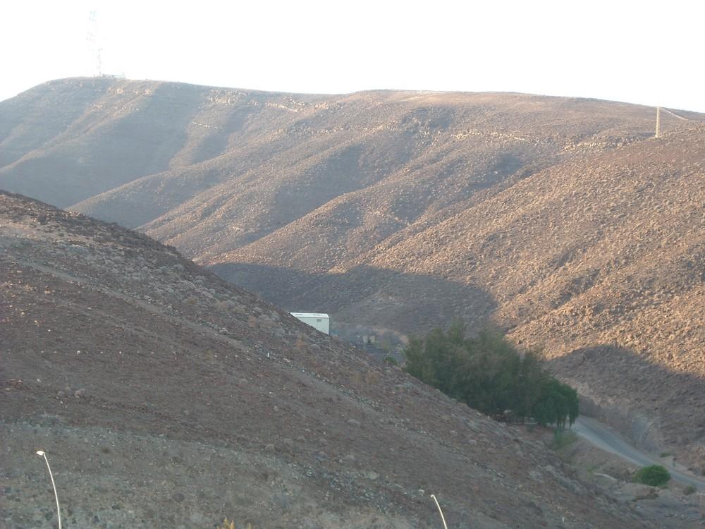 Wildes Fuerteventura