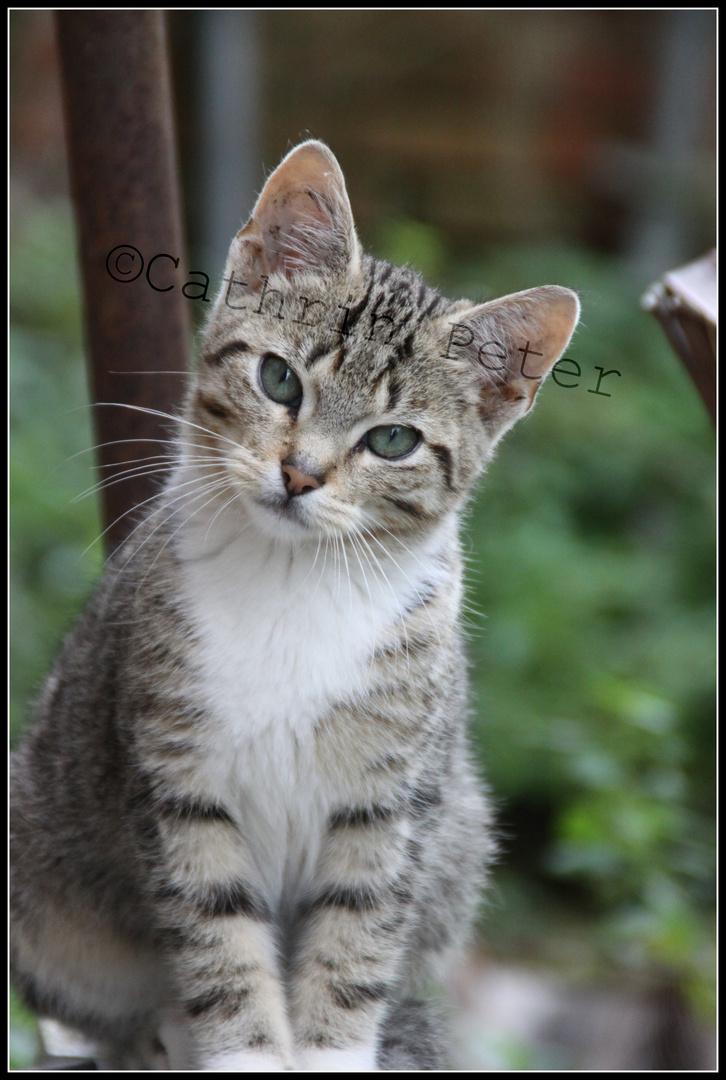 Wildes Katzenbaby