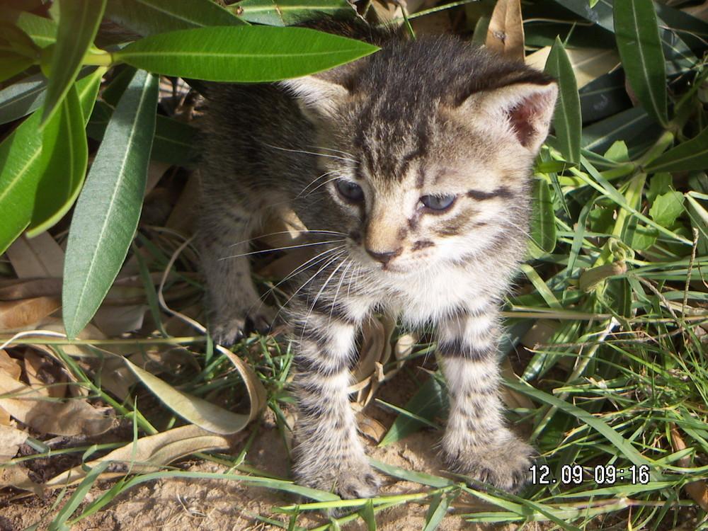 Wildes Katzenjunges