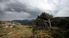 Wildes Korsika