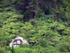Wildes Land an der Westküste von Neuseelands Südinsel
