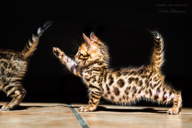 Wildes Leopardbaby