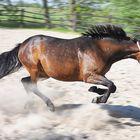 Wildes Pferd - so kennen wir ihn gar nicht!!