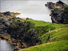 Wildes Shetland