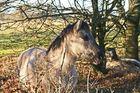 Wildferde im NABU Rheinlandpfalz