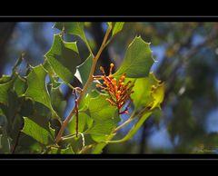 Wildflower IX