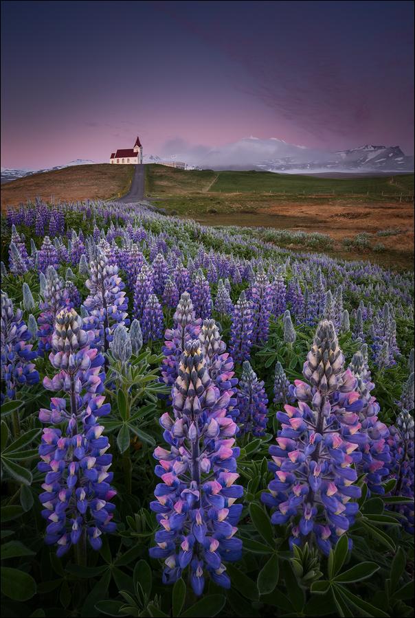 [ ... wildflowers ]