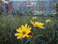 Wildflowers at the Train Stop