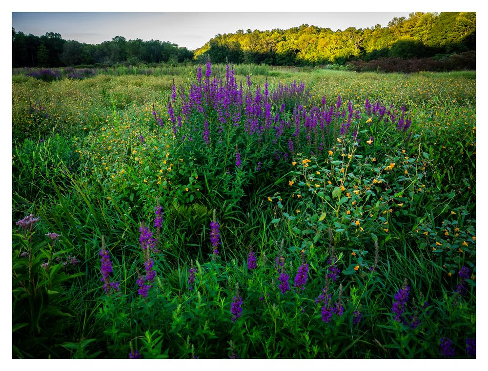 wildflowers in the meadow along the way