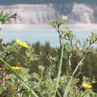 Wildflowers of the Rockies