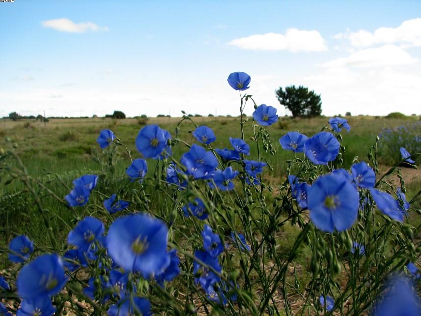 Wildflowersin New Mexico Spring_2007_31