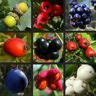 Wildfrüchte des Herbstes