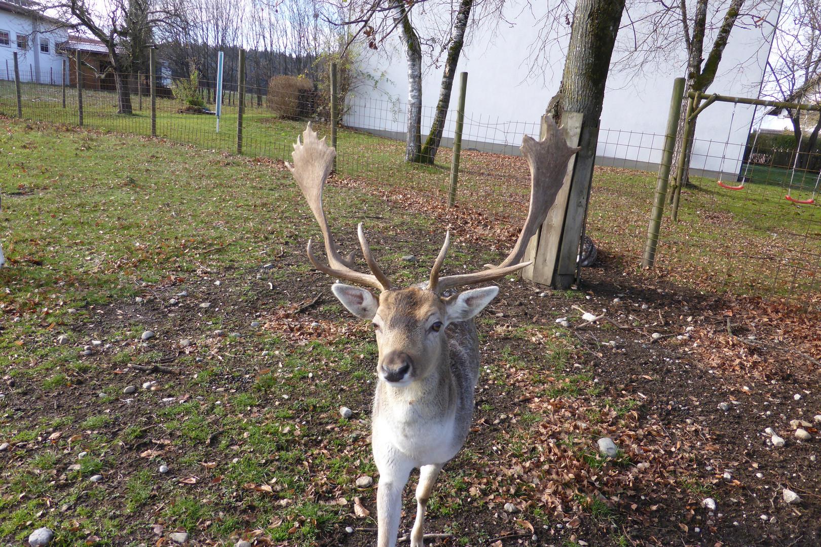 Wildgehege in Geisenbrunn